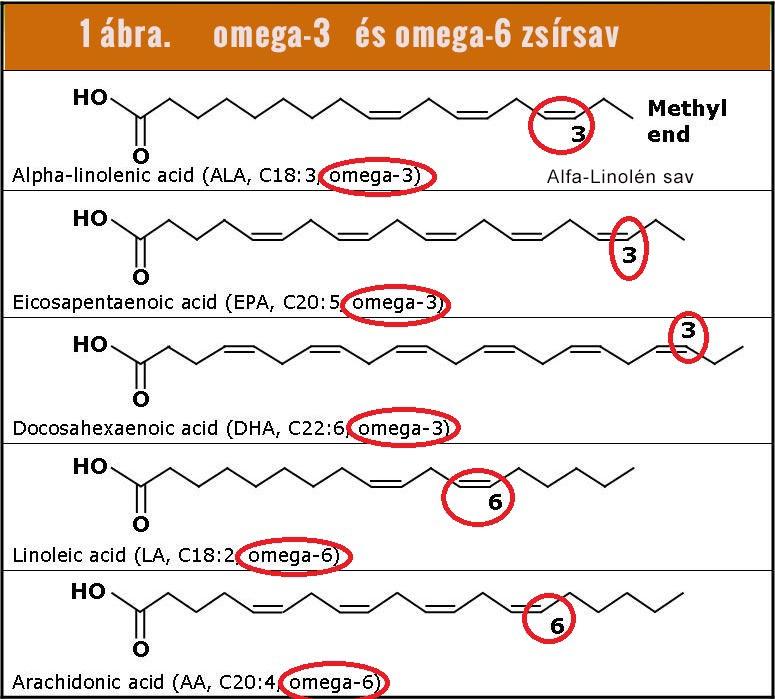 Omega-3 és Omega-6 zsírsavak: ALA, EPA, DHA, LA, AA